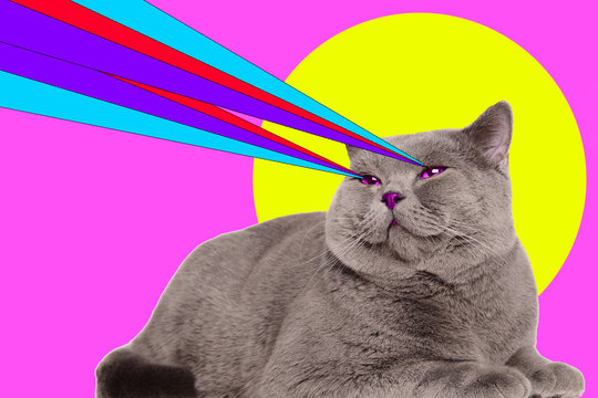 Cat with lasers from eyes. Minimal collage fashion concept