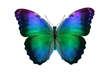 butterfly isolated on white. multicolor insect. tropical animal. template for design