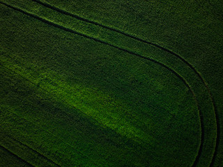Green crop fields with pattern, aerial view