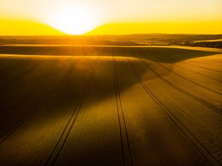 Golden sunrise over wheat farming fields
