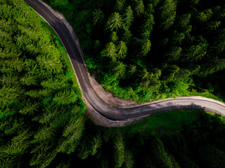 Curvy road in spring forest, aerial view.