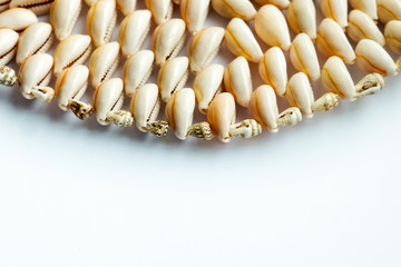 Beautiful summer cowrie shells on white background
