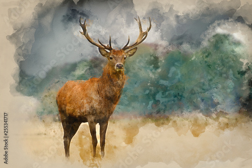 Fototapete Watercolor painting of Portrait of majestic red deer stag in Autumn Fall