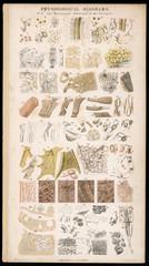 Anatomy Various Parts