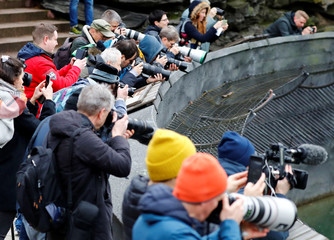 Media members take pictures as a female polar bear cub together with 9 year-old mother Tonja, is presented to the media for the first time, at Tierpark Berlin zoo in Berlin