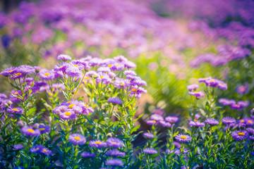 Purple flowers on beautiful bokeh background. Spring summer garden scene