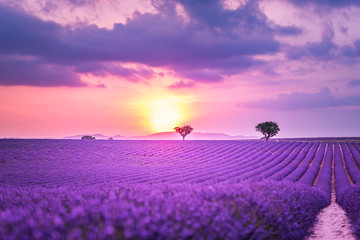 Fond de hotte en verre imprimé Prune Stunning landscape with lavender field at sunset. Blooming violet fragrant lavender flowers with sun rays with warm sunset sky.