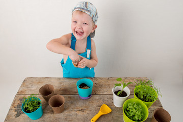 Happy blond boy helps plant seedlings for planting in open ground at parents' farm. Little kid holding seedling in plastic pots on the domestic garden. Close up view. Selective focus