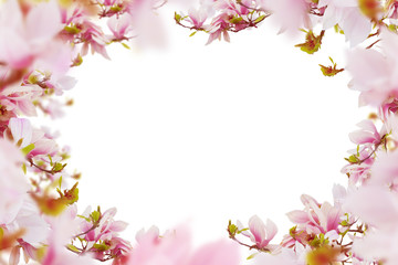 Bright pink- white magnolia flowers frame white isolated