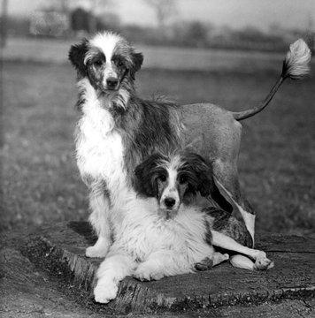 Fall Water Dog 1956
