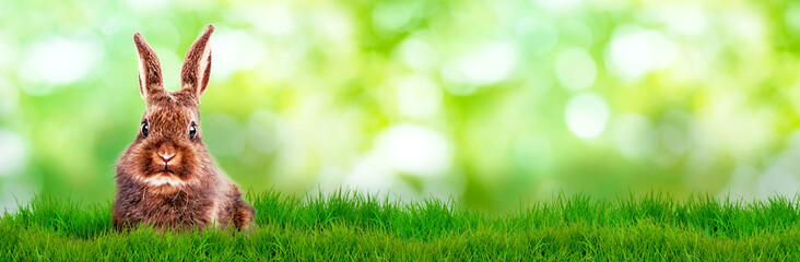 green background banner bunny