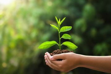 Wall Mural - hand holding young plant and green background with sunshine. eco concept earth day