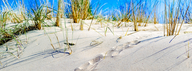 Closeup of a dune lit by sunlight with undefined animal footprints in the sand. Copy space. Facebook banner. Summer concept. Vacation. Tourism. Retreat. Nature therapy.