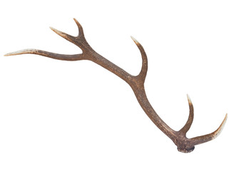 One deer antler isolated on a white background Wall mural