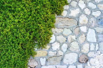 Stone wall with ivy as background