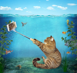 The funny cat takes a selfie underwater on the seabed against the background of fish.