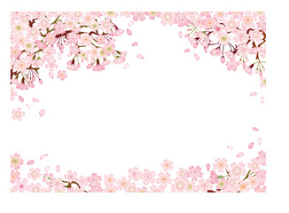 Cherry Blossom Spring Illustration, pink flower of japan sakura