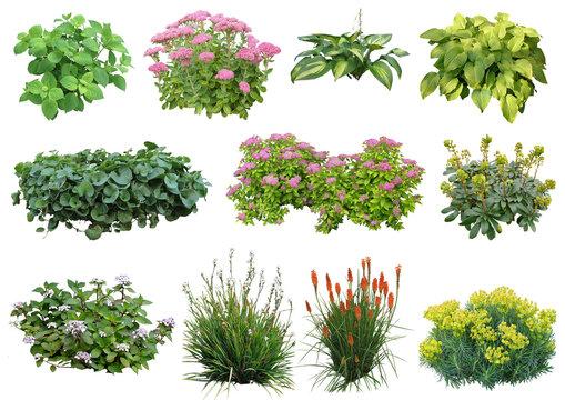 Plante détourée (plantes vivaces, hortensia, euphorbe, sedum...)