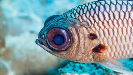 Fish close up in Palau