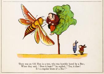 Old Man in a Tree, Edward Lear