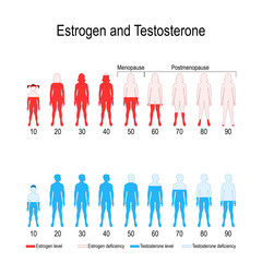 Estrogen and testosterone hormone levels