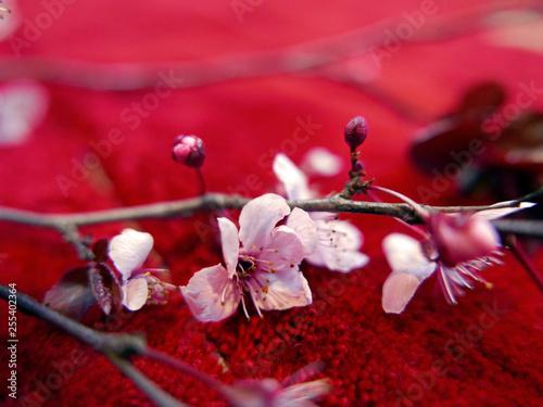 Ramo Di Fiori Di Pesco Fotografato In Interno Su Sfondo Rosso Stock