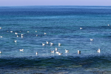 birds on the shores of the Mediterranean in northern Israel