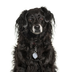 Mixed-breed dog in front of white background