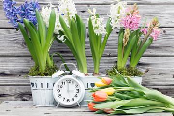 Zeitumstellung Sommerzeit im Frühling mit Tulpen und Hyazinthen,