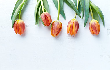 Spring tulips on white painted wooden background. Flat aly. Copy space