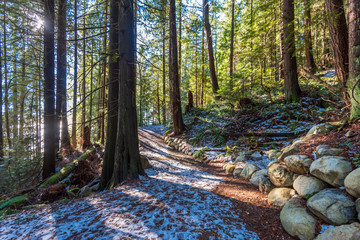 Fragment of winter trail in park in West Vancouver, Canada.