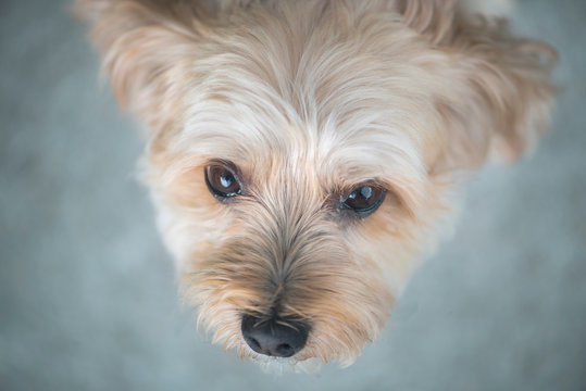 A dog looking up to camera