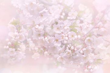 Beautiful image of a flowering tree, the blur effect. Toned image, selective focus.