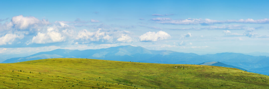 panorama of a mountain landscape in summer. beautiful scenery with fluffy clouds above the distant borzhva ridge. huge grassy alpine meadow. location runa, ukraine