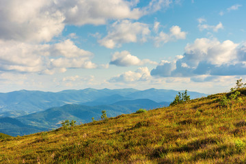 mountain scenery in summer afternoon. fluffy clouds on a blue sky above the distant ridge. grassy alpine meadow on a hill. beautiful carpathian landscape in evening light