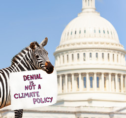 Zebra hold sign denial is not a climate policy
