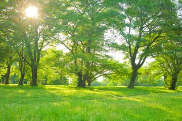Fotobehang Pistache morning forest