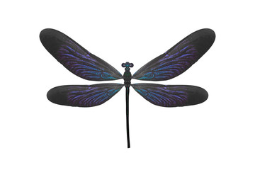 insect dragonfly with blue wings. isolated on white background