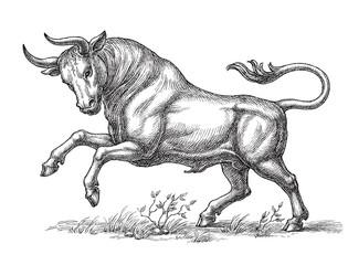 Hand drawn illustration, wild bull, engraving style.