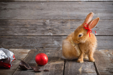 rabbit with chocolate eggs on wooden background