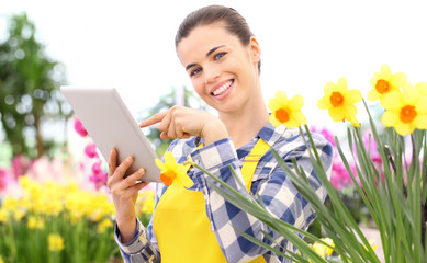 smiling woman in garden of flowers daffodils touch screen of digital tablet, spring flowering concept and internet search