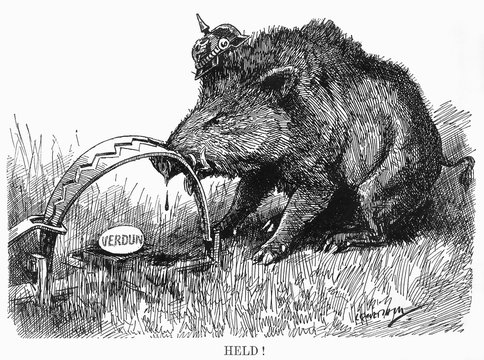 German Boar Held at Verdun Cartoon