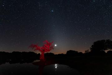 Night landscape with dry tree illuminated red. Arroyo de la Luz Extremadura. Spain.