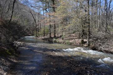 Briar Creek in Ouachita National Forest Arkansas
