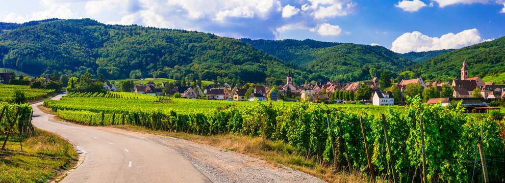 "Alsace region of France - famous ""Vine route"" . beautiful vineyards and traditional vilages"