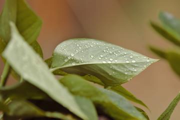 Makro von einem Blatt einer Pflanze im Regen mit Regentropfen