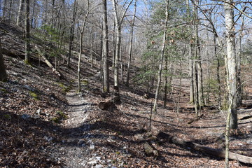 Athens-Big Fork Trail in Ouachita National Forest Arkansas