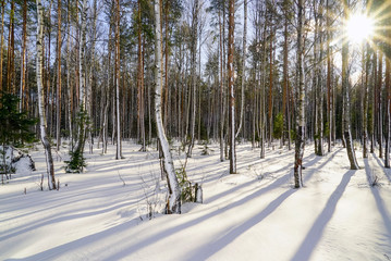 Winter forest with snow-covered trees on a bright Sunny day.