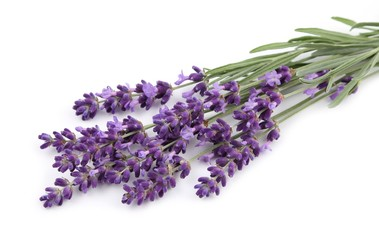 Wall Mural - Bouquet of lavender.