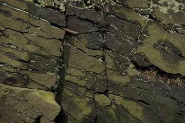 Stone texture surface and roots